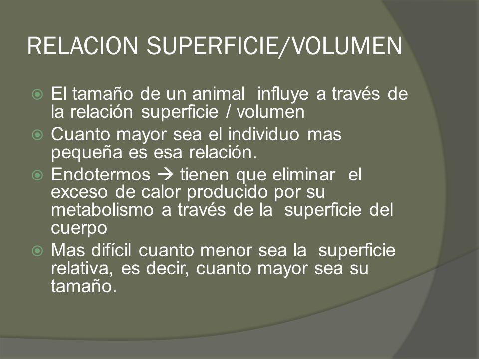 RELACION SUPERFICIE/VOLUMEN El tamaño de un animal influye a través de la relación superficie / volumen Cuanto mayor sea el individuo mas pequeña es e