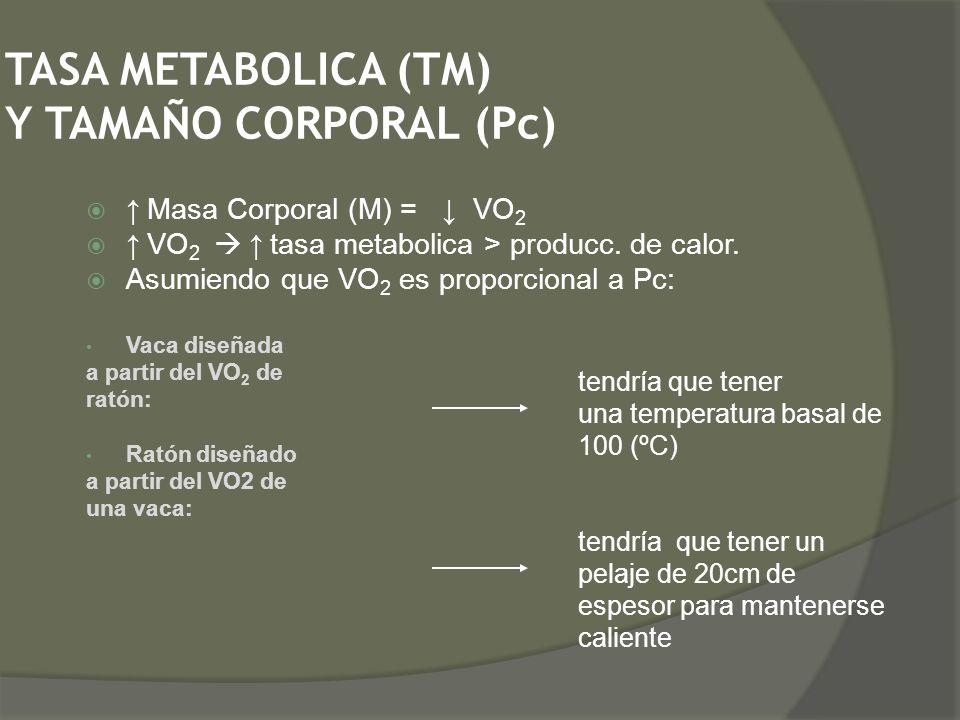 TASA METABOLICA (TM) Y TAMAÑO CORPORAL (Pc) Masa Corporal (M) = VO 2 VO 2 tasa metabolica > producc. de calor. Asumiendo que VO 2 es proporcional a Pc