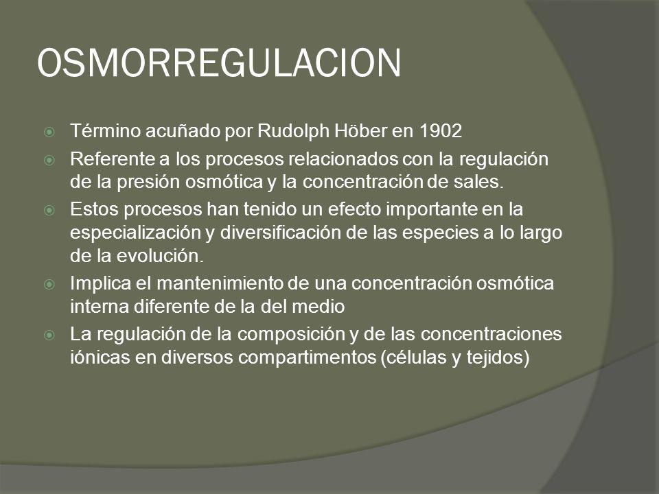 OSMORREGULACION Término acuñado por Rudolph Höber en 1902 Referente a los procesos relacionados con la regulación de la presión osmótica y la concentr