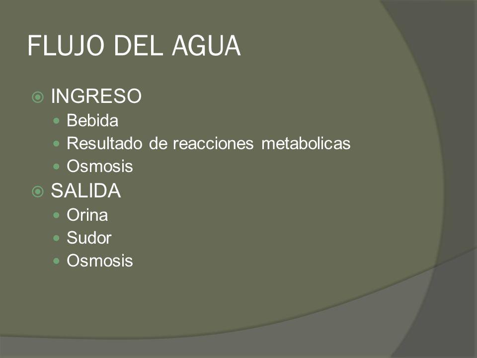 FLUJO DEL AGUA INGRESO Bebida Resultado de reacciones metabolicas Osmosis SALIDA Orina Sudor Osmosis