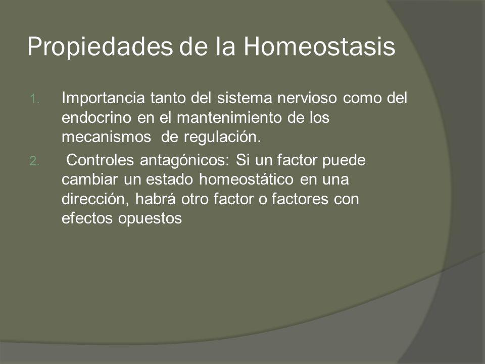 Propiedades de la Homeostasis 1. Importancia tanto del sistema nervioso como del endocrino en el mantenimiento de los mecanismos de regulación. 2. Con