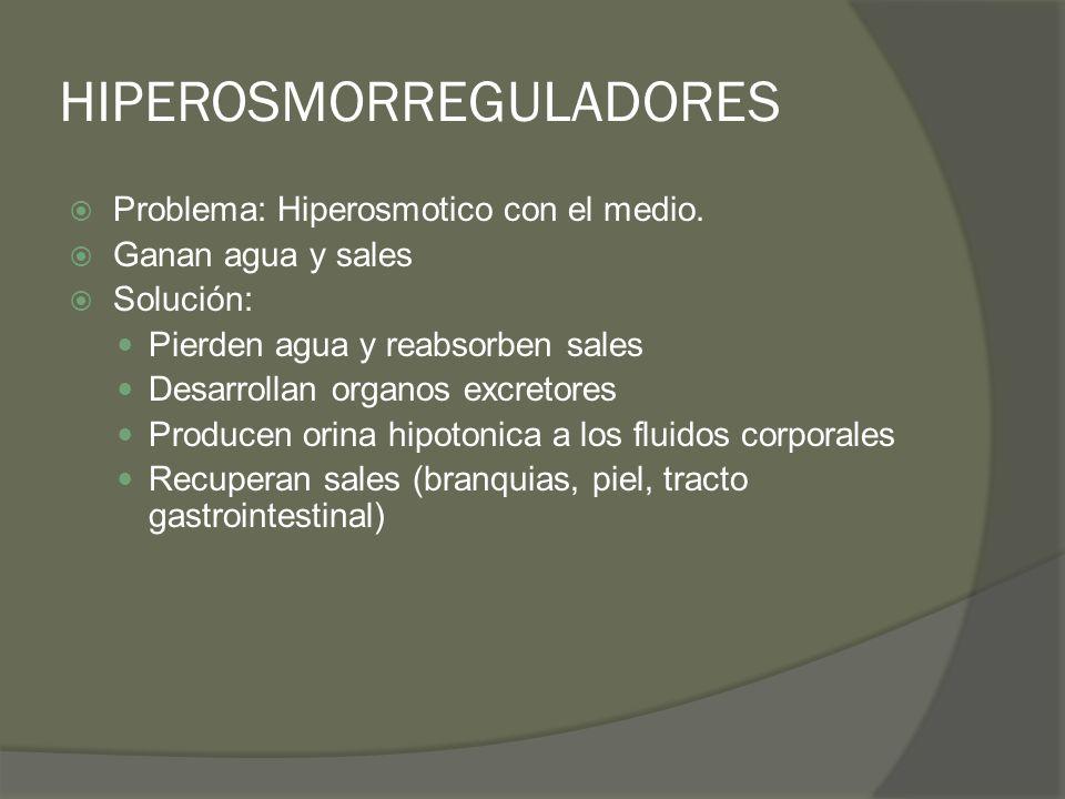 HIPEROSMORREGULADORES Problema: Hiperosmotico con el medio. Ganan agua y sales Solución: Pierden agua y reabsorben sales Desarrollan organos excretore
