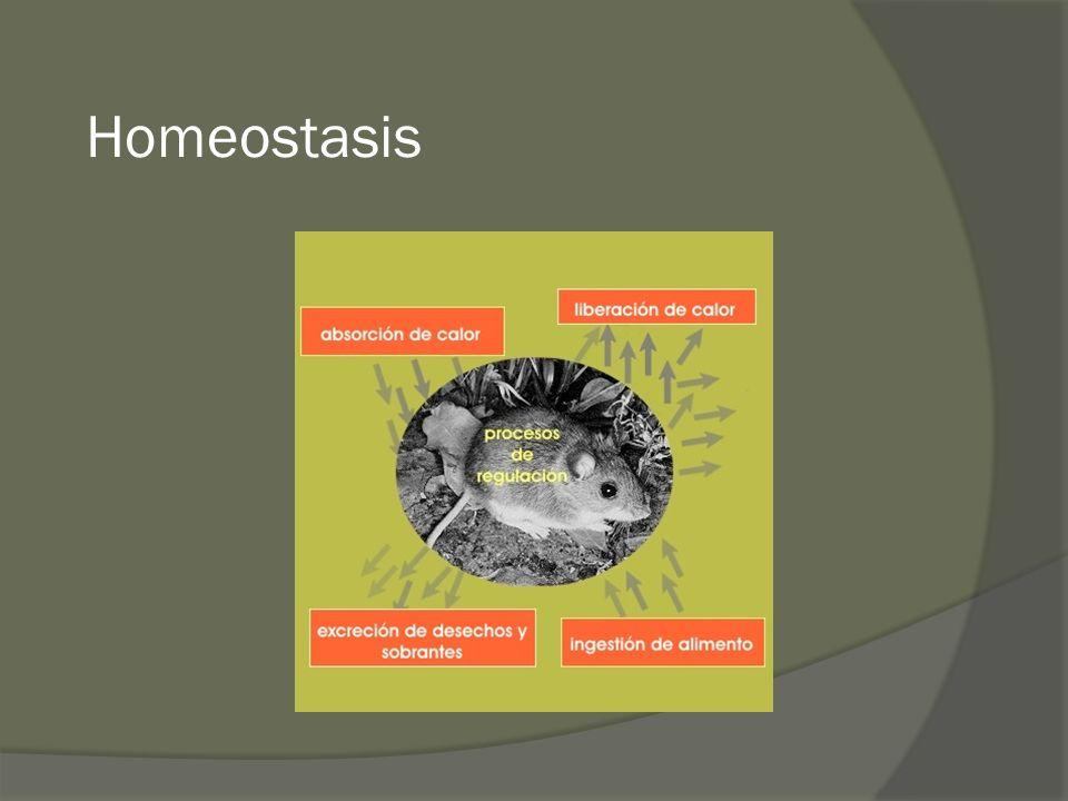La membrana plasmática de la célula puede considerarse como semipermeable, y por ello las células deben permanecer en equilibrio osmótico con los líquidos que las bañan.
