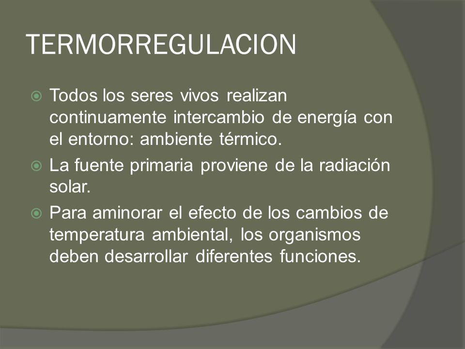 TERMORREGULACION Todos los seres vivos realizan continuamente intercambio de energía con el entorno: ambiente térmico. La fuente primaria proviene de