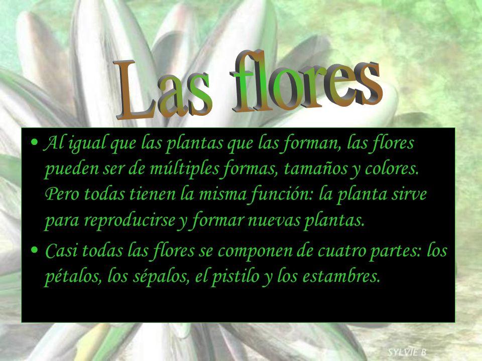 Al igual que las plantas que las forman, las flores pueden ser de múltiples formas, tamaños y colores. Pero todas tienen la misma función: la planta s