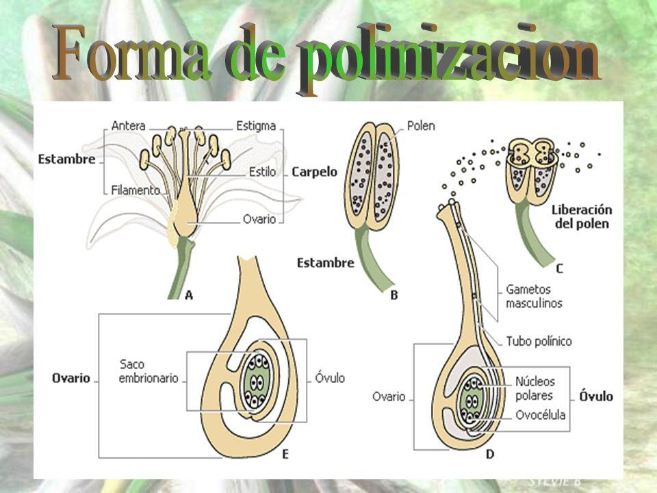 Son las únicas plantas que se han adaptado a vivir en todos los ecosistemas de la Tierra, salvo en las regiones polares; los cactus viven en los desiertos, las poseidonias en el fondo del mar y los edelweiss en las cumbres de las montañas.