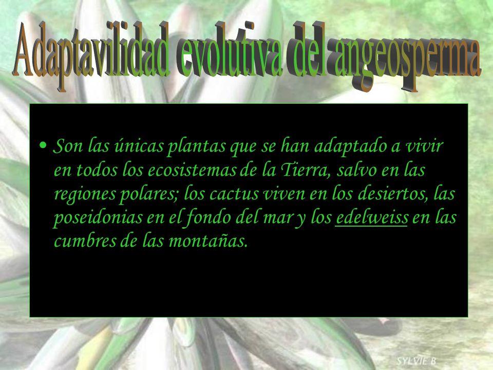 Son las únicas plantas que se han adaptado a vivir en todos los ecosistemas de la Tierra, salvo en las regiones polares; los cactus viven en los desie