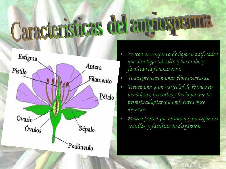 Poseen un conjunto de hojas modificadas que dan lugar al cáliz y la corola, y facilitan la fecundación. Todas presentan unas flores vistosas. Tienen u