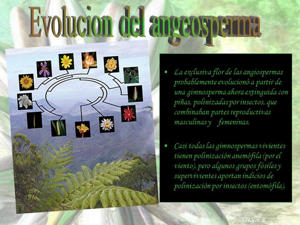 La exclusiva flor de las angiospermas probablemente evolucionó a partir de una gimnosperma ahora extinguida con piñas, polinizadas por insectos, que c