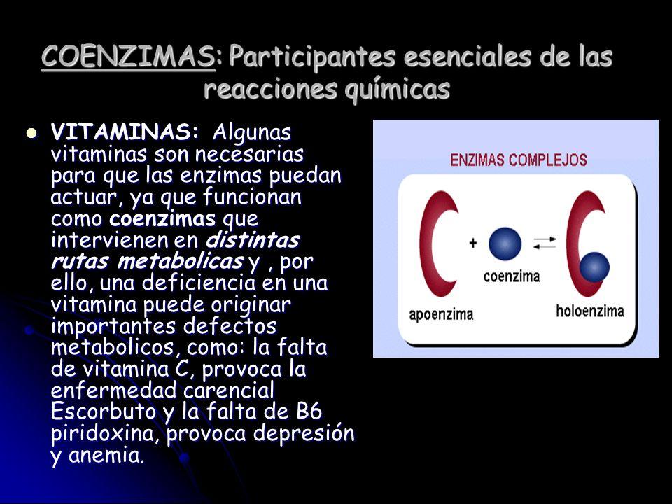 COENZIMAS: Participantes esenciales de las reacciones químicas VITAMINAS: Algunas vitaminas son necesarias para que las enzimas puedan actuar, ya que
