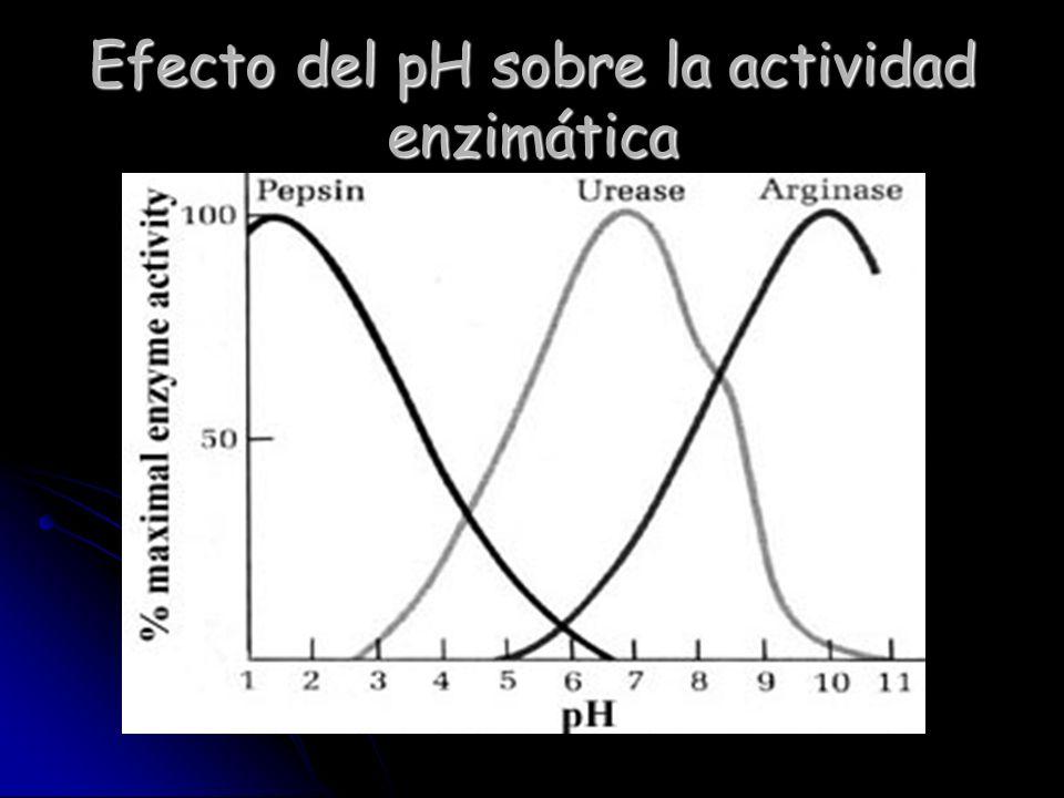Efecto de la temperatura en la reacción química
