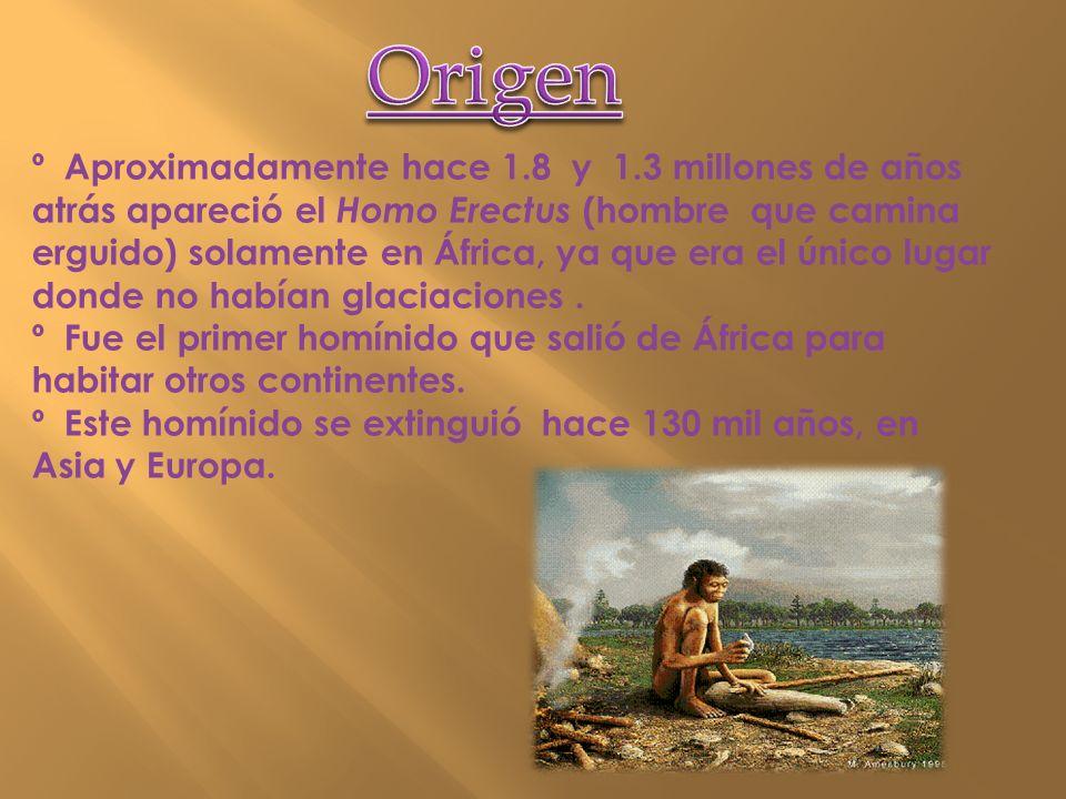 º Aproximadamente hace 1.8 y 1.3 millones de años atrás apareció el Homo Erectus (hombre que camina erguido) solamente en África, ya que era el único