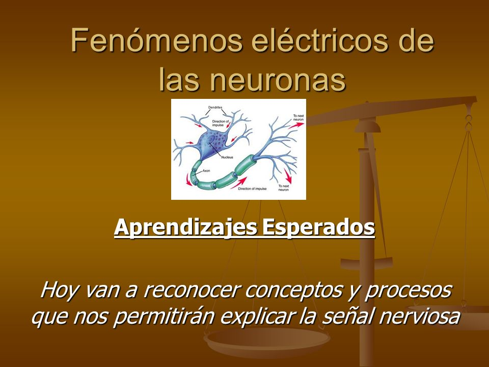 Fenómenos eléctricos de las neuronas Aprendizajes Esperados Hoy van a reconocer conceptos y procesos que nos permitirán explicar la señal nerviosa