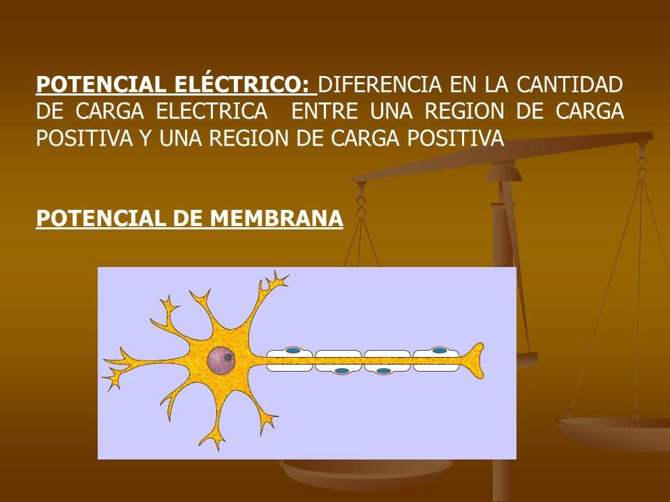 POTENCIAL ELÉCTRICO: DIFERENCIA EN LA CANTIDAD DE CARGA ELECTRICA ENTRE UNA REGION DE CARGA POSITIVA Y UNA REGION DE CARGA POSITIVA POTENCIAL DE MEMBR