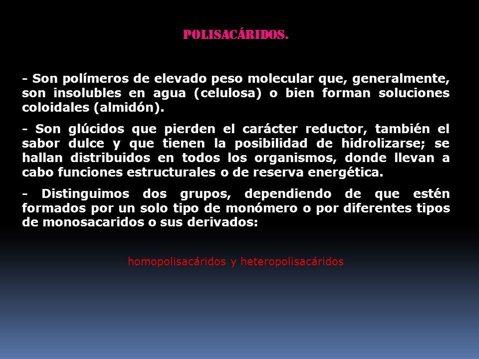 Polisacáridos. - Son polímeros de elevado peso molecular que, generalmente, son insolubles en agua (celulosa) o bien forman soluciones coloidales (alm
