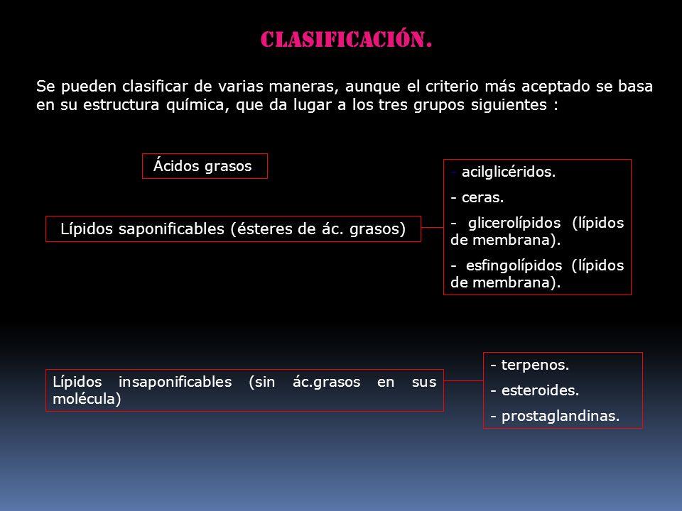 Clasificación. Lípidos saponificables (ésteres de ác. grasos) Lípidos insaponificables (sin ác.grasos en sus molécula) Ácidos grasos. - acilglicéridos