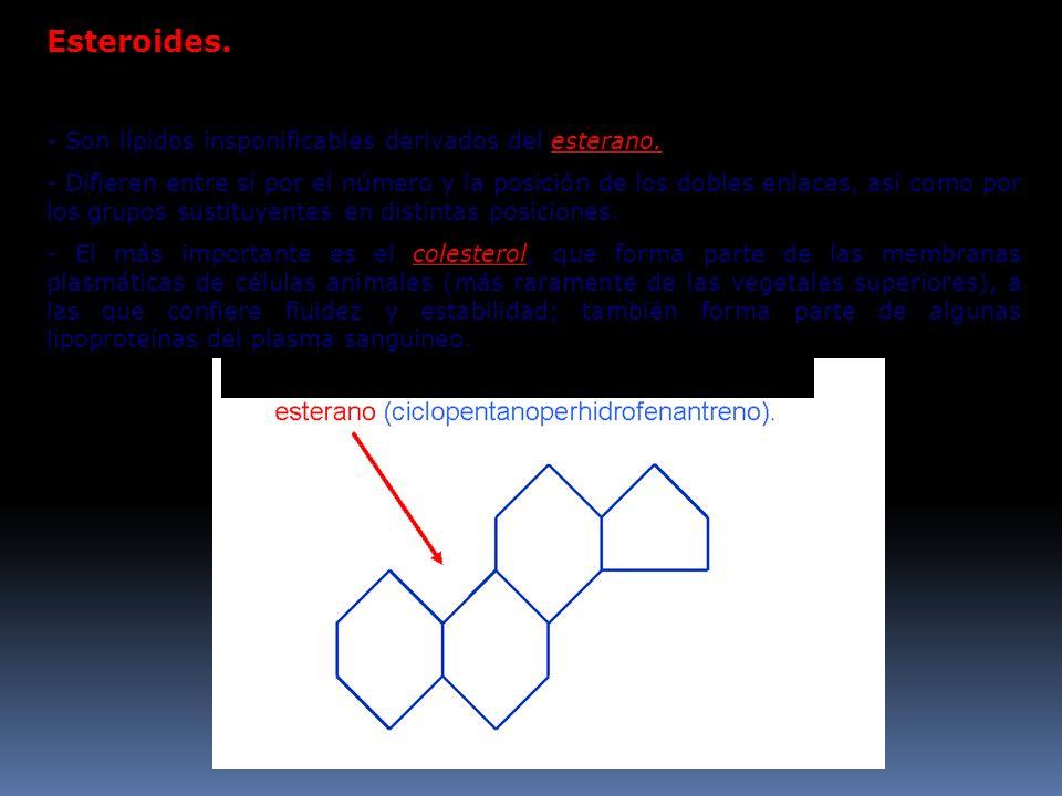 Esteroides. - Son lípidos insponificables derivados del esterano. - Difieren entre sí por el número y la posición de los dobles enlaces, así como por