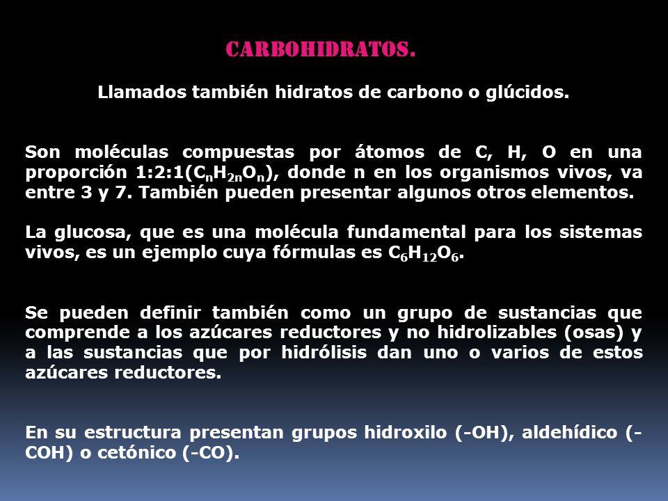 Carbohidratos. Llamados también hidratos de carbono o glúcidos. Son moléculas compuestas por átomos de C, H, O en una proporción 1:2:1(C n H 2n O n ),
