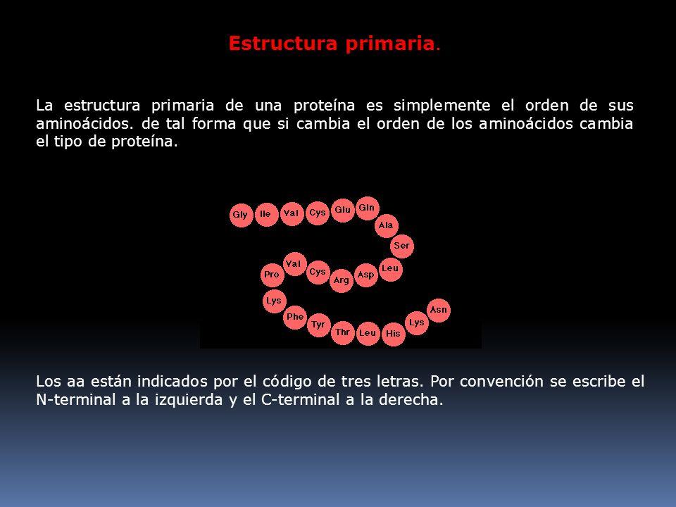 Estructura primaria. La estructura primaria de una proteína es simplemente el orden de sus aminoácidos. de tal forma que si cambia el orden de los ami