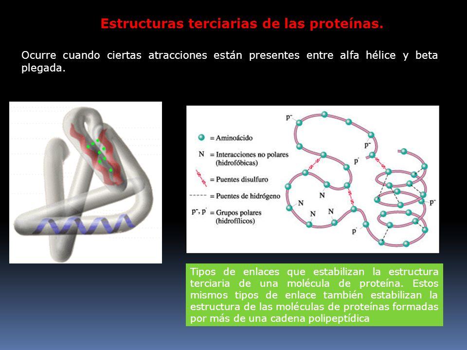 Estructuras terciarias de las proteínas. Ocurre cuando ciertas atracciones están presentes entre alfa hélice y beta plegada. Tipos de enlaces que esta
