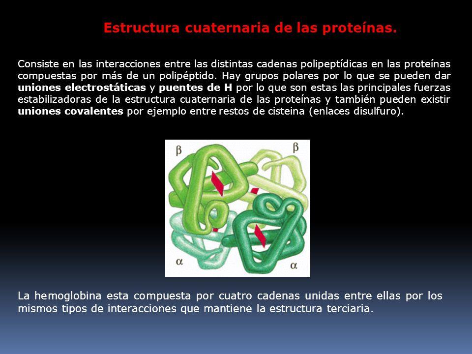 Estructura cuaternaria de las proteínas. Consiste en las interacciones entre las distintas cadenas polipeptídicas en las proteínas compuestas por más