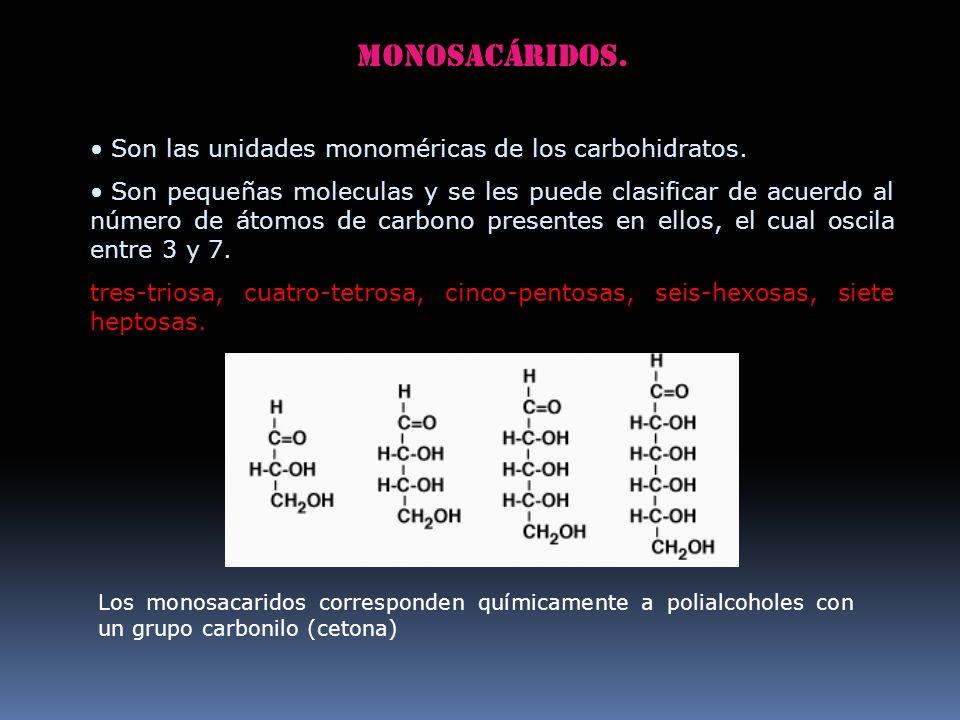 Monosacáridos. Son las unidades monoméricas de los carbohidratos. Son pequeñas moleculas y se les puede clasificar de acuerdo al número de átomos de c
