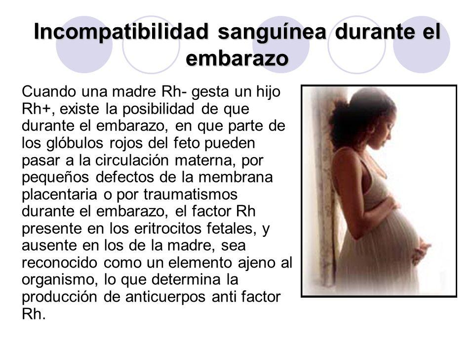 Incompatibilidad sanguínea durante el embarazo Cuando una madre Rh- gesta un hijo Rh+, existe la posibilidad de que durante el embarazo, en que parte