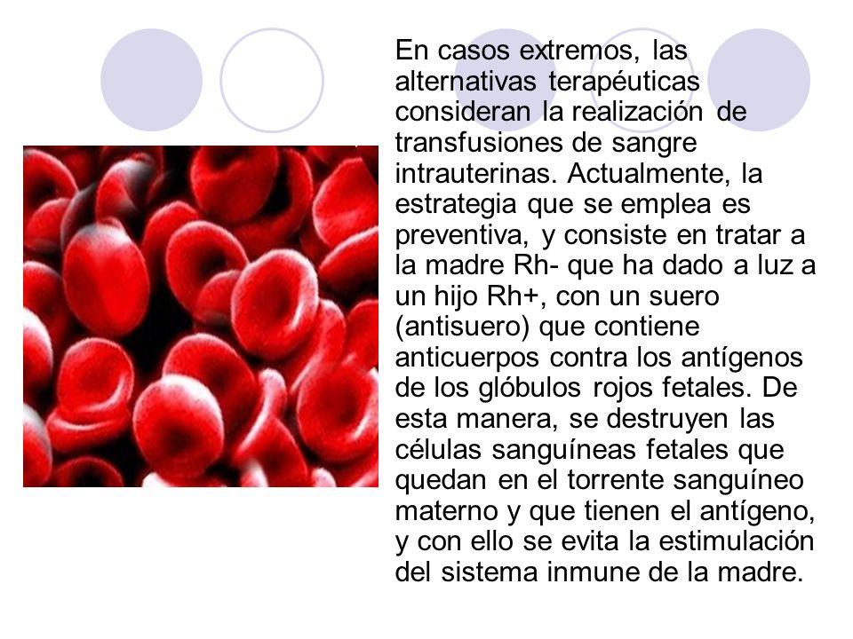 En casos extremos, las alternativas terapéuticas consideran la realización de transfusiones de sangre intrauterinas. Actualmente, la estrategia que se