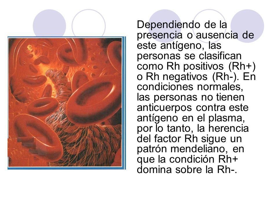 Dependiendo de la presencia o ausencia de este antígeno, las personas se clasifican como Rh positivos (Rh+) o Rh negativos (Rh-). En condiciones norma