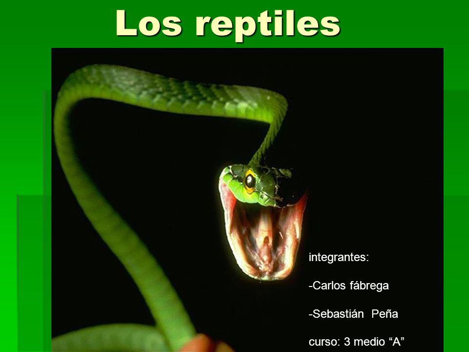 Los reptiles Los reptiles integrantes: -Carlos fábrega -Sebastián Peña curso: 3 medio A