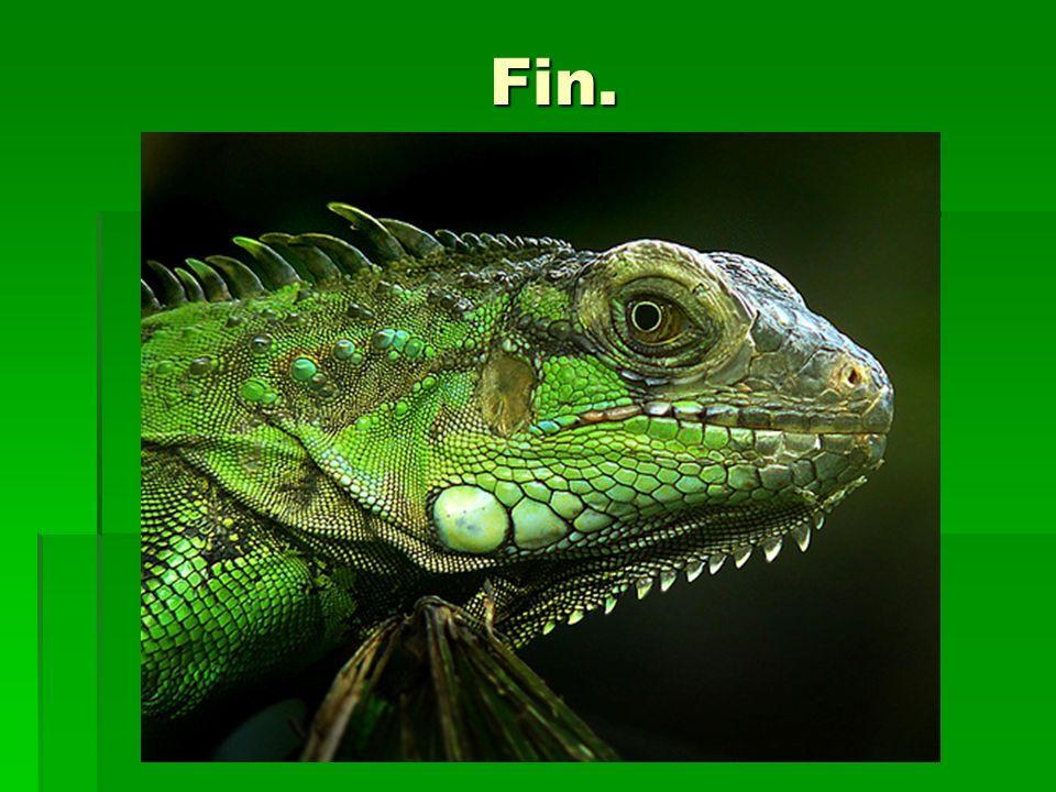 Fin. Fin.