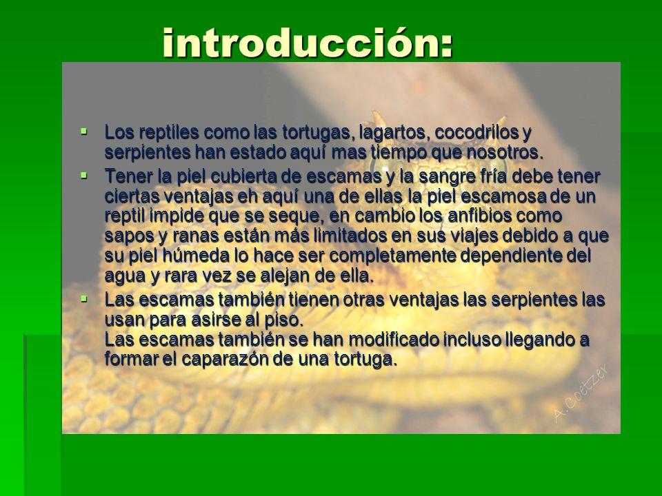 introducción: introducción: Los reptiles como las tortugas, lagartos, cocodrilos y serpientes han estado aquí mas tiempo que nosotros. Los reptiles co
