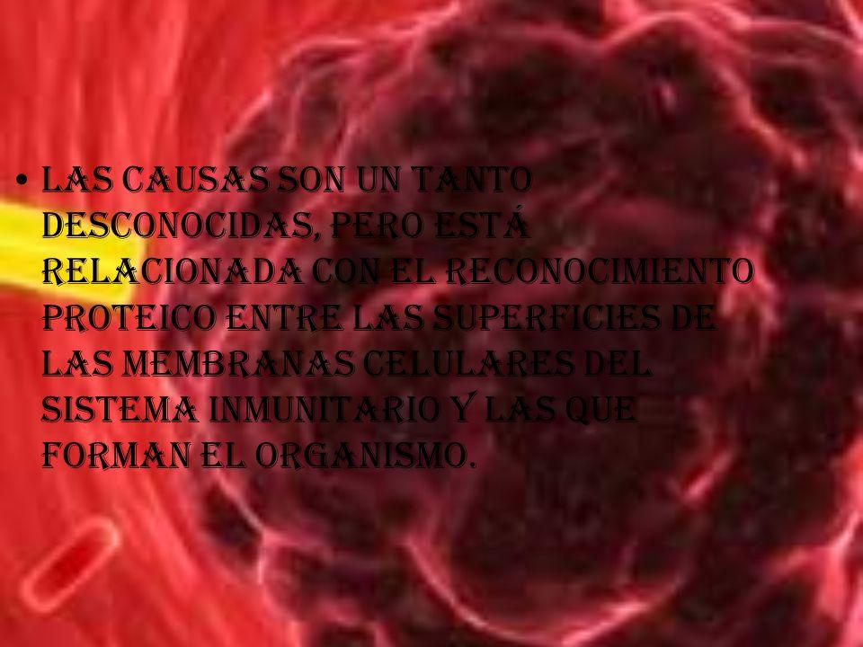 Las causas son un tanto desconocidas, pero está relacionada con el reconocimiento proteico entre las superficies de las membranas celulares del sistem