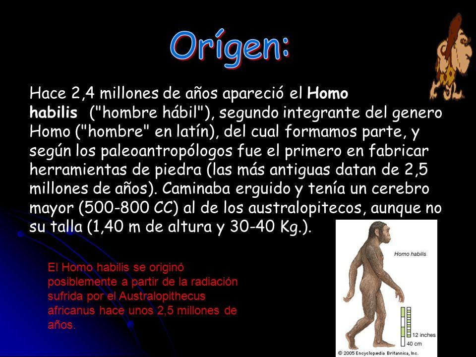 Hace 2,4 millones de años apareció el Homo habilis (