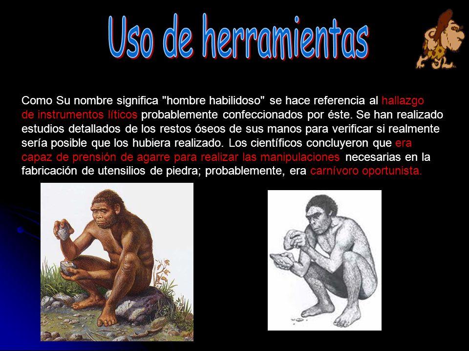 El homo Habilis fue una de las primeras especies que existieron en cuanto a la evolución humana, es entonces uno de los que dio el paso a las demás especies en el mejoramiento de su sobrevivencia.