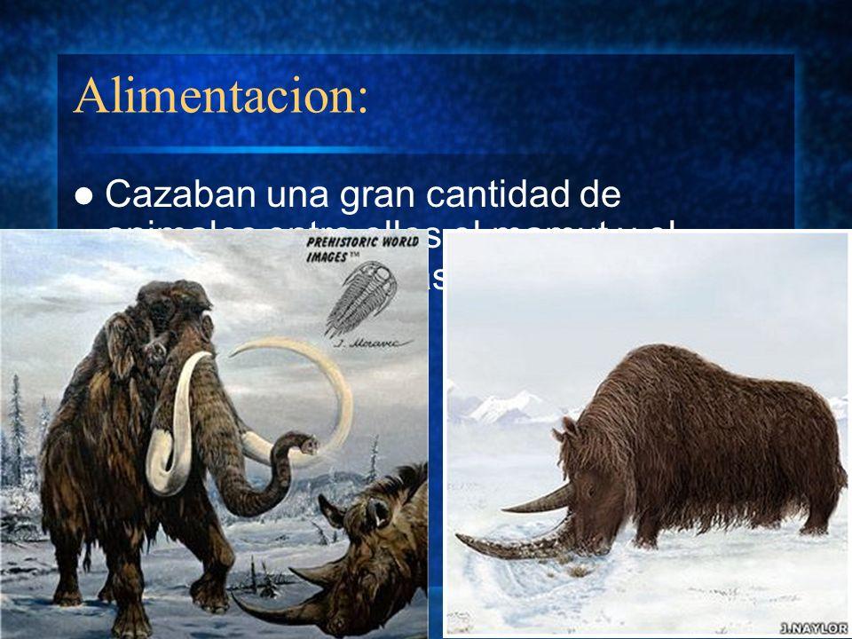 Alimentacion: Cazaban una gran cantidad de animales entre ellos el mamut y el rinoceronte, además de practicar el canibalismo.