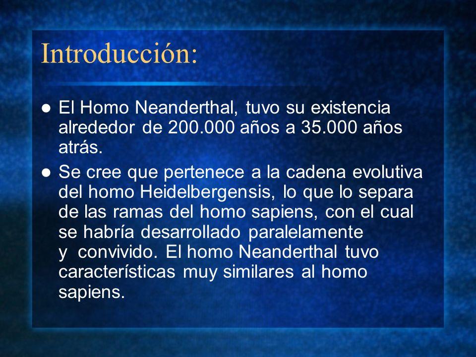 Introducción: El Homo Neanderthal, tuvo su existencia alrededor de 200.000 años a 35.000 años atrás. Se cree que pertenece a la cadena evolutiva del h