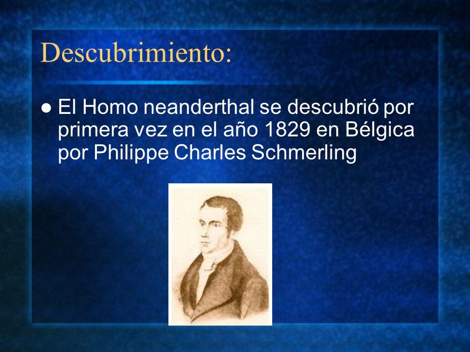 Descubrimiento: El Homo neanderthal se descubrió por primera vez en el año 1829 en Bélgica por Philippe Charles Schmerling