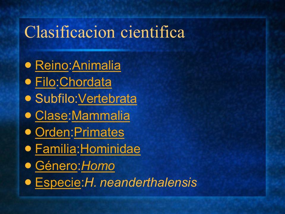 Clasificacion cientifica Reino:Animalia ReinoAnimalia Filo:Chordata FiloChordata Subfilo:VertebrataVertebrata Clase:Mammalia ClaseMammalia Orden:Prima