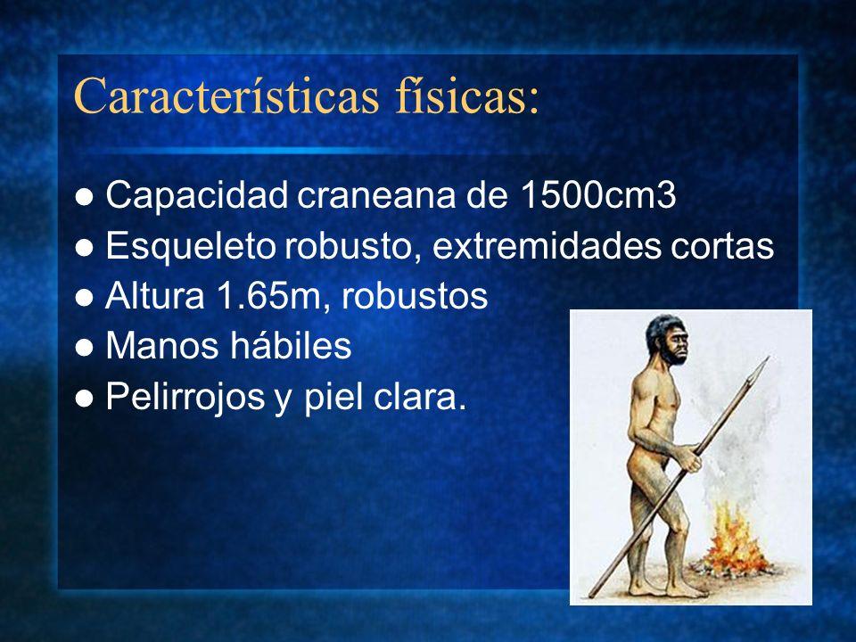 Características físicas: Capacidad craneana de 1500cm3 Esqueleto robusto, extremidades cortas Altura 1.65m, robustos Manos hábiles Pelirrojos y piel c