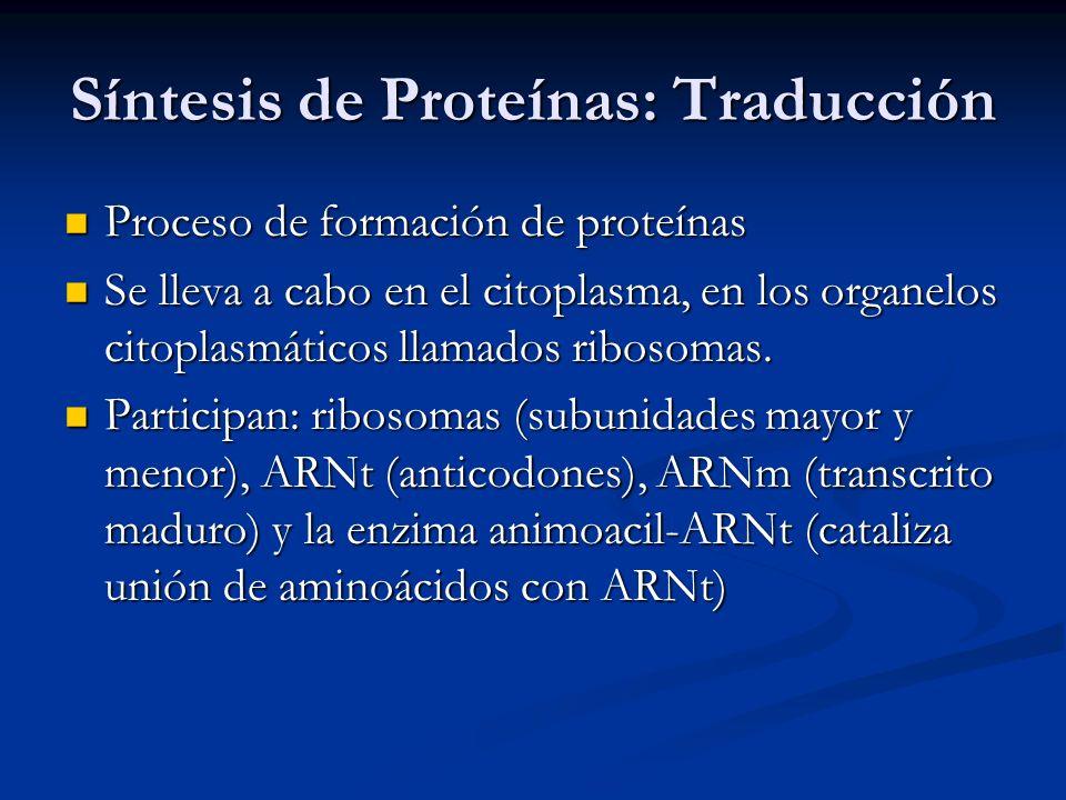 Síntesis de Proteínas: Traducción Proceso de formación de proteínas Proceso de formación de proteínas Se lleva a cabo en el citoplasma, en los organel