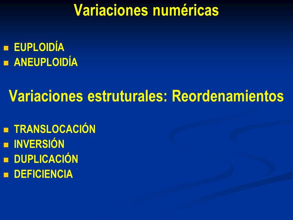 Variaciones numéricas EUPLOIDÍA ANEUPLOIDÍA Variaciones estruturales: Reordenamientos TRANSLOCACIÓN INVERSIÓN DUPLICACIÓN DEFICIENCIA