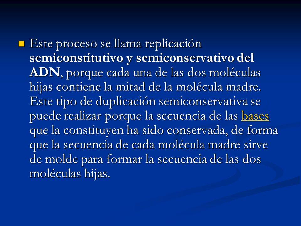 Este proceso se llama replicación semiconstitutivo y semiconservativo del ADN, porque cada una de las dos moléculas hijas contiene la mitad de la molé