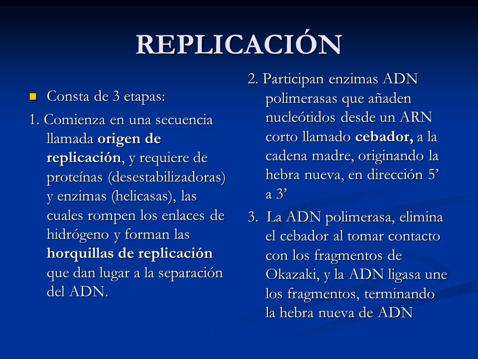 REPLICACIÓN Consta de 3 etapas: Consta de 3 etapas: 1. Comienza en una secuencia llamada origen de replicación, y requiere de proteínas (desestabiliza