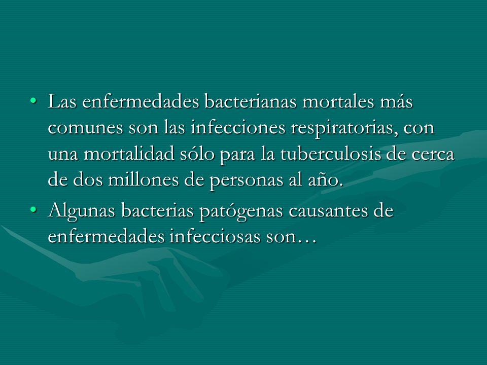 Las enfermedades bacterianas mortales más comunes son las infecciones respiratorias, con una mortalidad sólo para la tuberculosis de cerca de dos mill