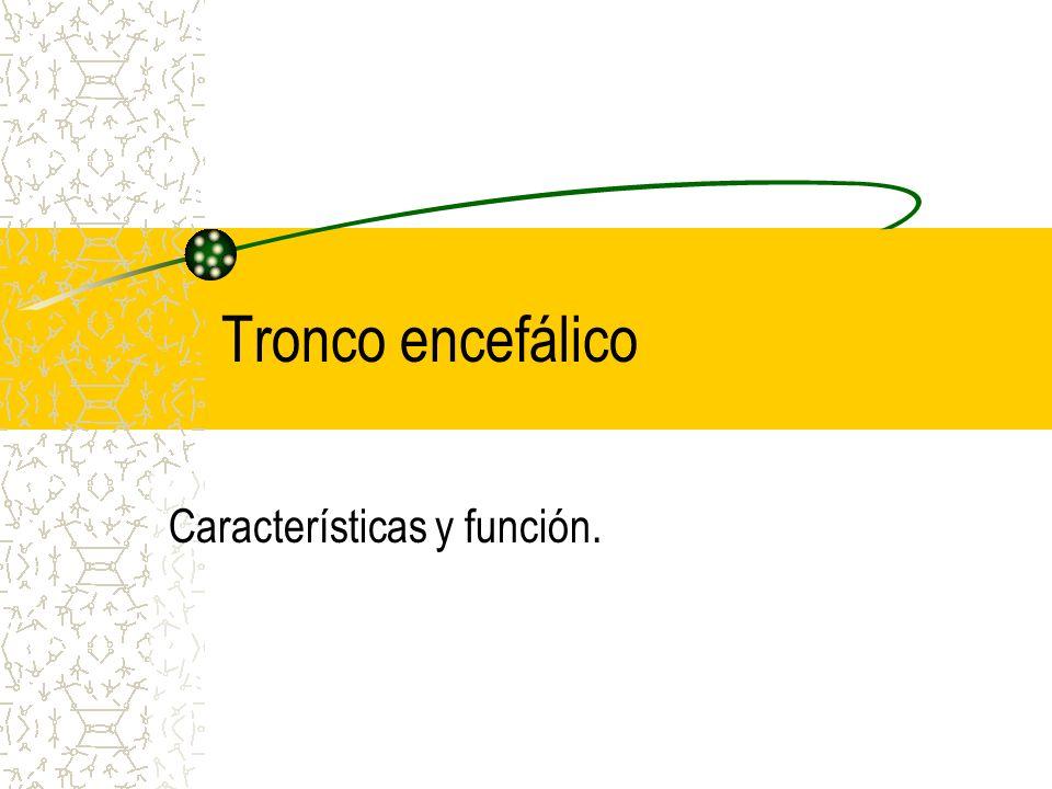 Tronco encefálico Características y función.