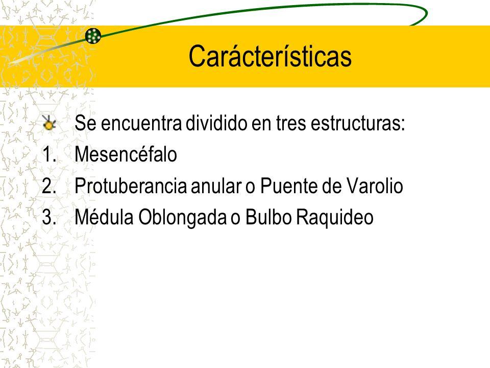 Carácterísticas Se encuentra dividido en tres estructuras: 1.Mesencéfalo 2.Protuberancia anular o Puente de Varolio 3.Médula Oblongada o Bulbo Raquide