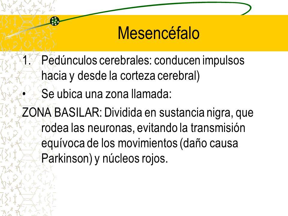 Mesencéfalo 1.Pedúnculos cerebrales: conducen impulsos hacia y desde la corteza cerebral) Se ubica una zona llamada: ZONA BASILAR: Dividida en sustanc