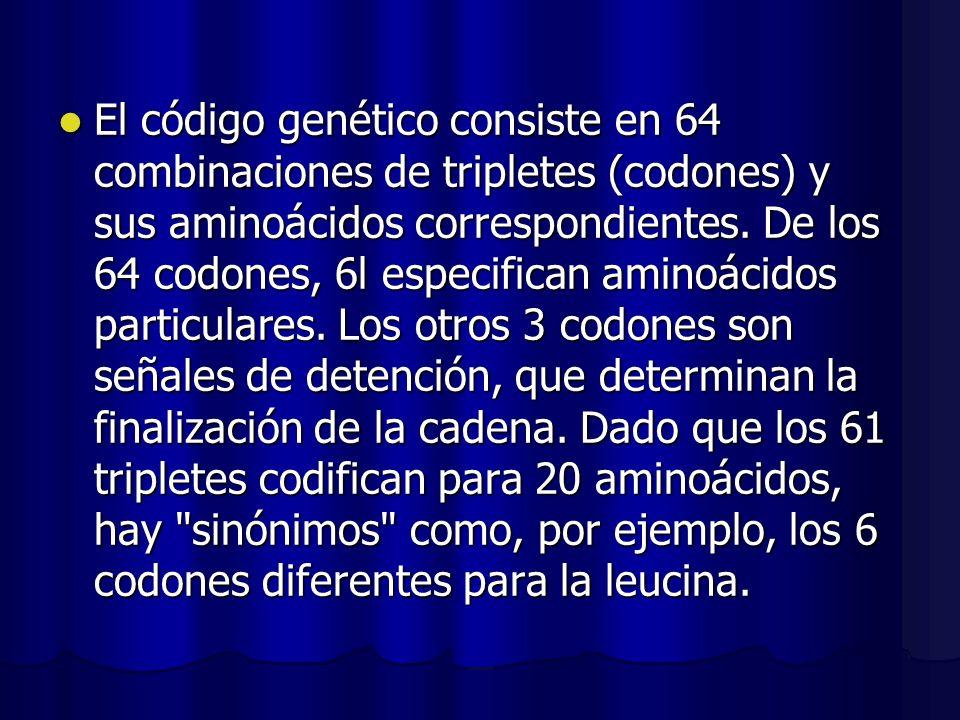El código genético consiste en 64 combinaciones de tripletes (codones) y sus aminoácidos correspondientes. De los 64 codones, 6l especifican aminoácid