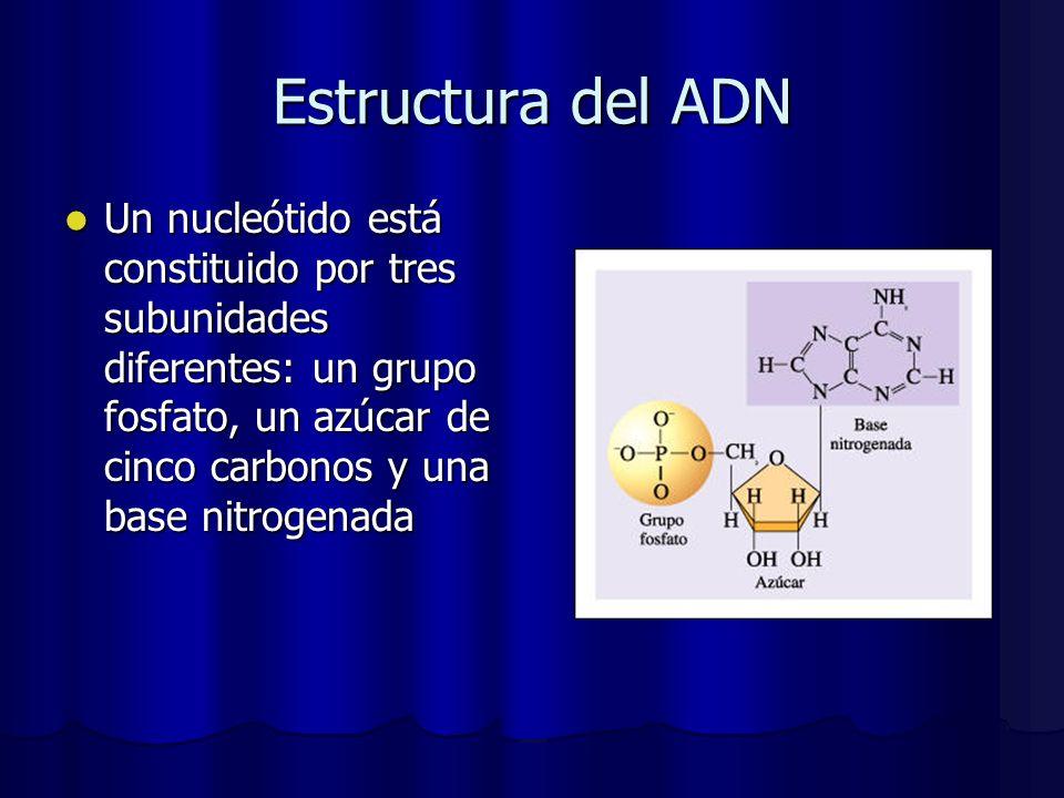 Estructura del ADN Un nucleótido está constituido por tres subunidades diferentes: un grupo fosfato, un azúcar de cinco carbonos y una base nitrogenad